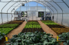CEAC off-grid greenhouse